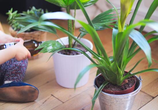 Enfant arrose les Plantes