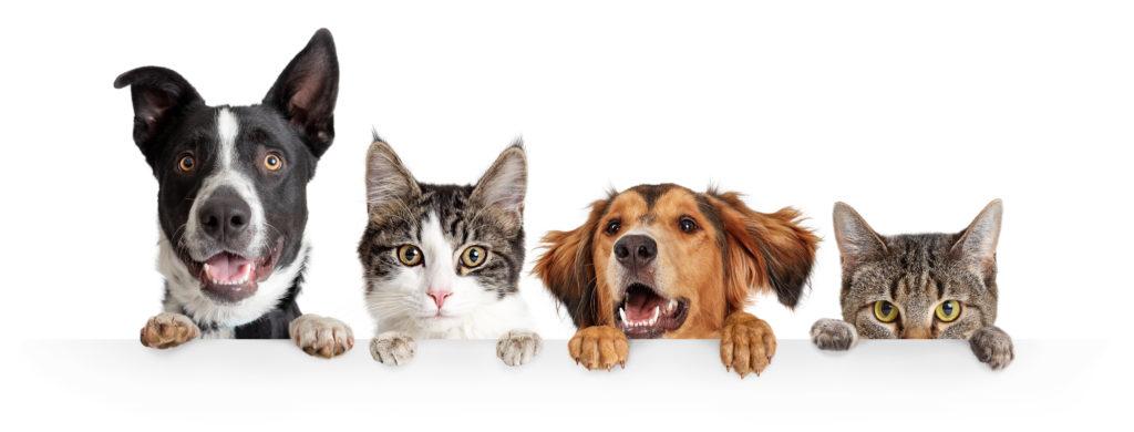 Chiens et chats heureux d'être ensemble